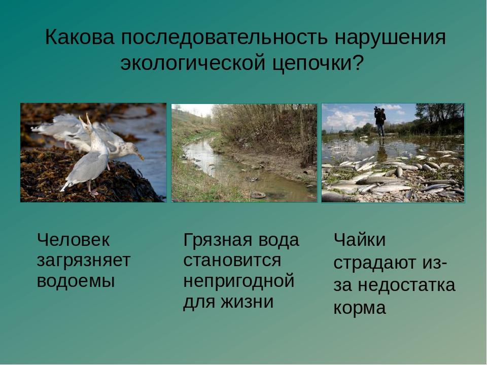 Составь свой экологический прогноз «Что будет, если…?» Экология – наука о то...