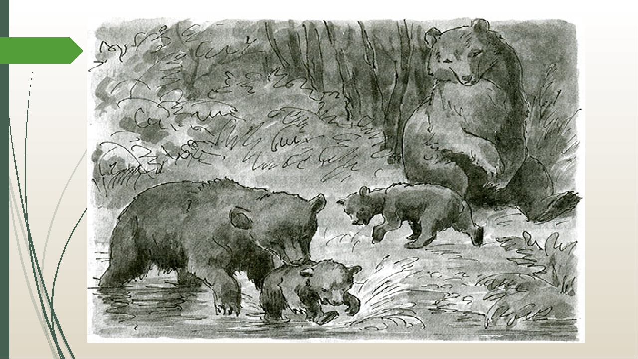 купить иллюстрации к рассказу в бианки купание медвежат частности заметили
