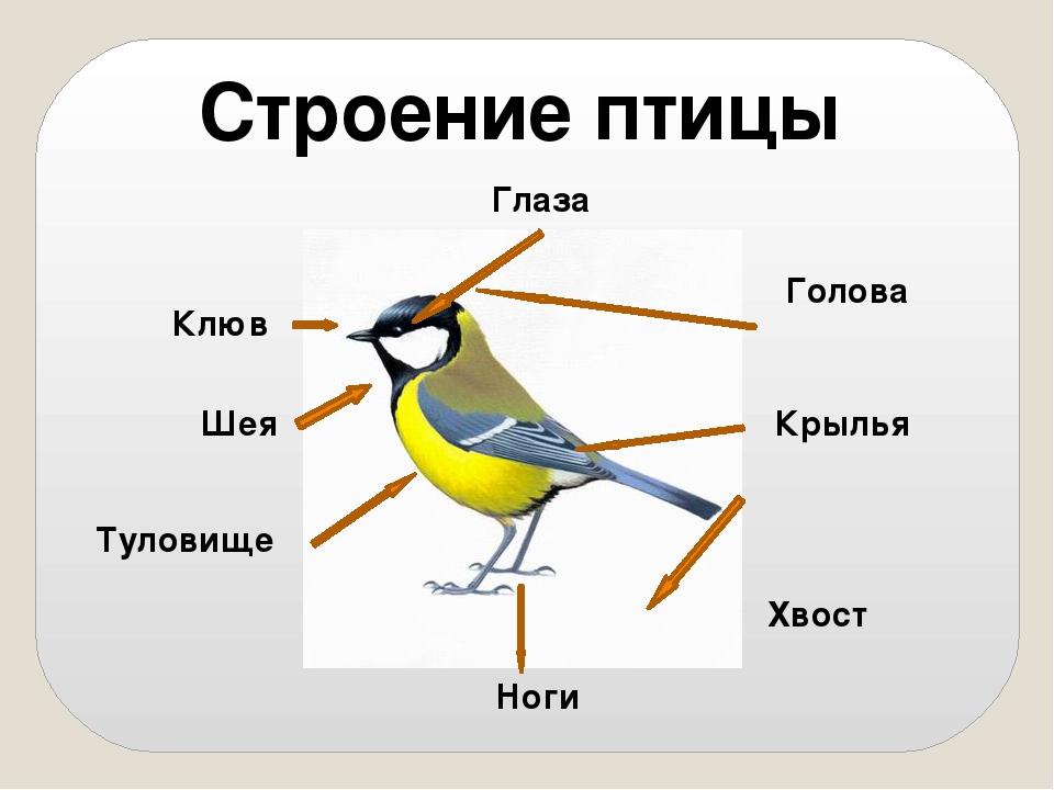 Картинки тело птички