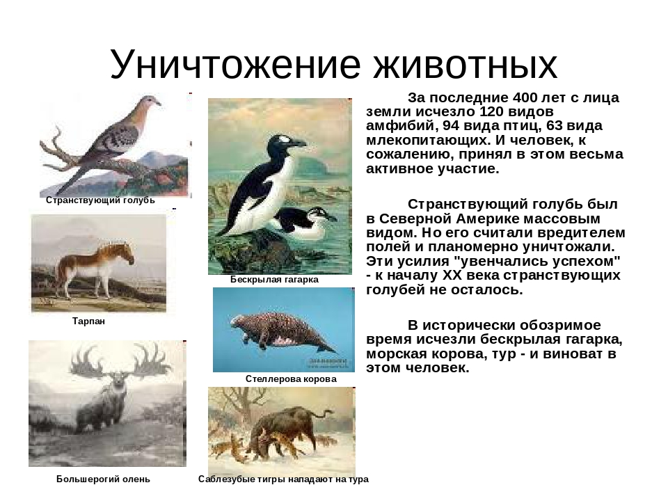 Уничтожение животных За последние 400 лет с лица земли исчезло 120 видов ам...