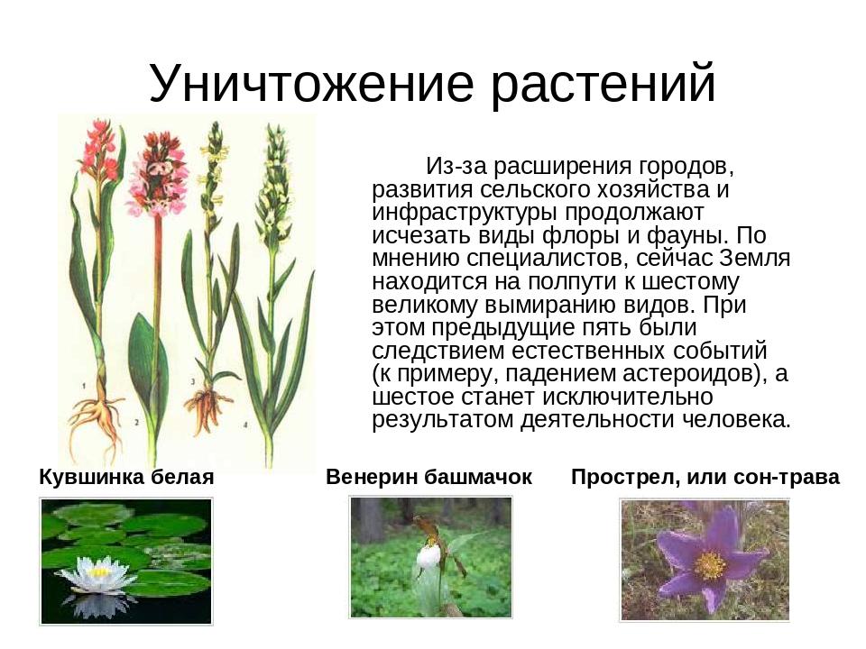 Уничтожение растений Из-за расширения городов, развития сельского хозяйства...