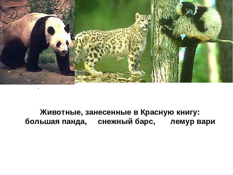 . Животные, занесенные в Красную книгу: большая панда, снежный барс, лемур...