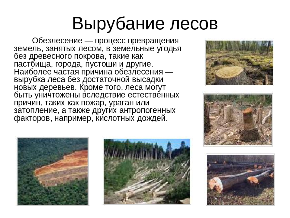 Вырубание лесов Обезлесение — процесс превращения земель, занятых лесом, в...