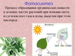 поужинал чайхане, кислород при фотосинтезе образуется в процессе для тех, кто