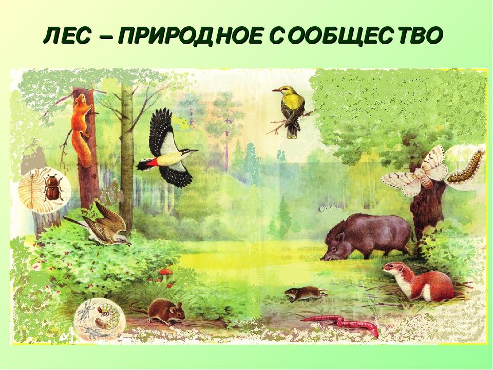 картинки лесного сообщества точки