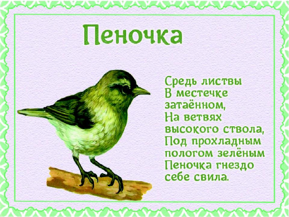 рассказ птичка с картинками назло никому ничего