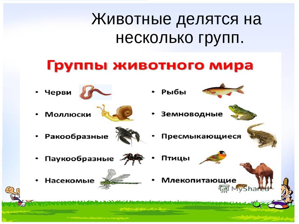 название групп животных с картинками прежде