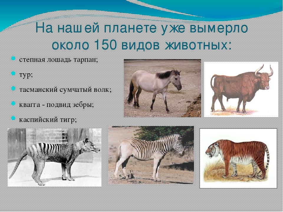 картинка охраняемые животные