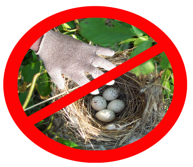 Картинки не разоряйте птичьи гнезда