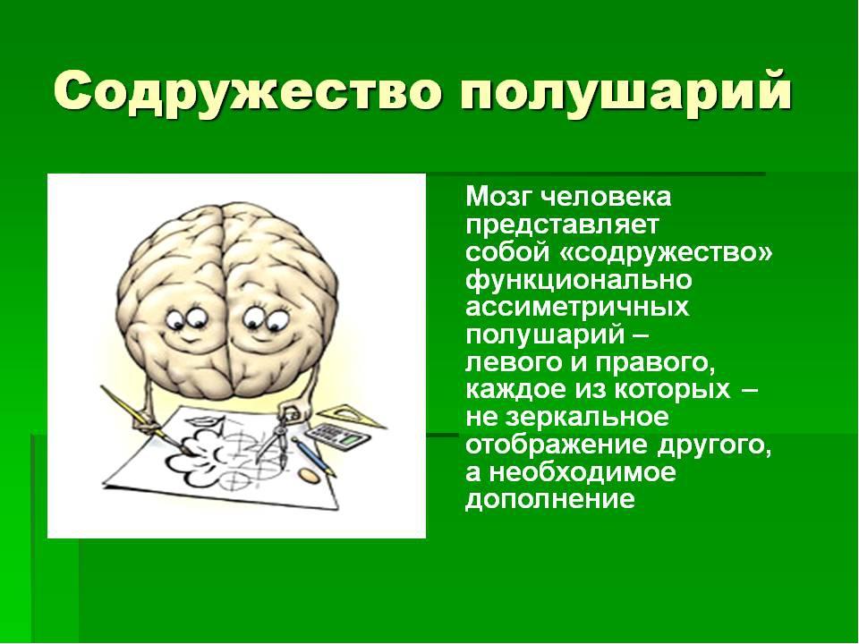 Упражнение в картинках мозга