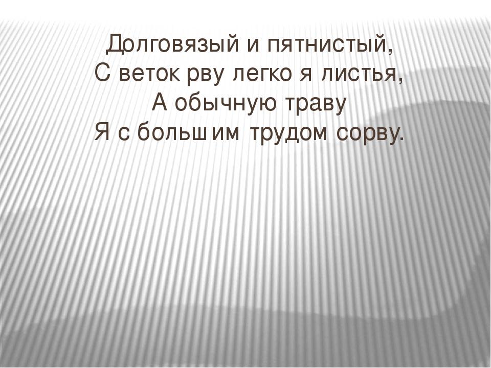 Долговязый и пятнистый, С веток рву легко я листья, А обычную траву Я с больш...