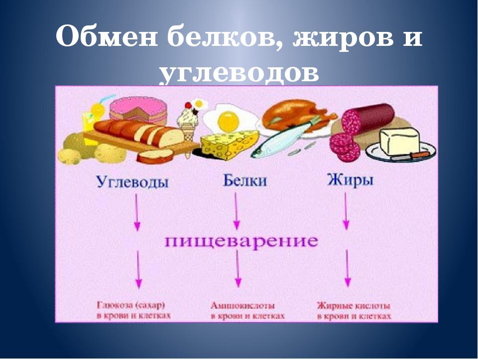 картинки продуктов в жирах углеводах белках и жирах фото глаз оторвать