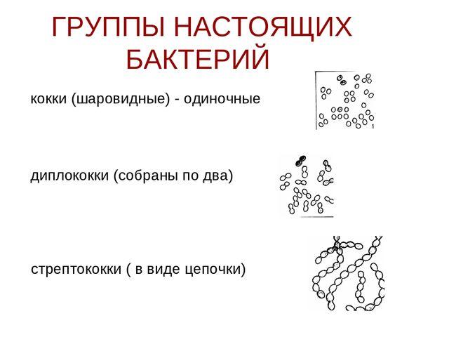 Презентацию на тему бактерии по биологии 7 класс