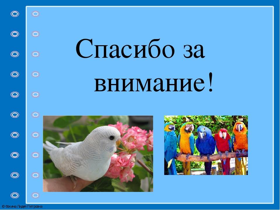 Картинка с надписью спасибо за внимание с птицами