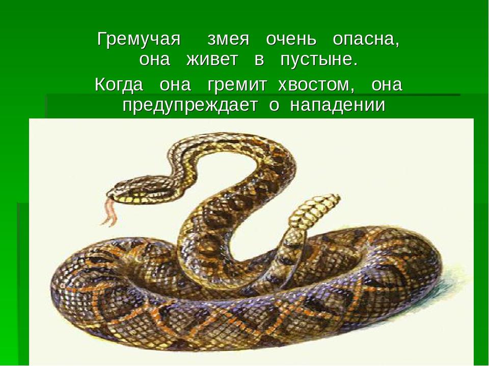 картинки и описание змей зачастую устанавливаются отверстие