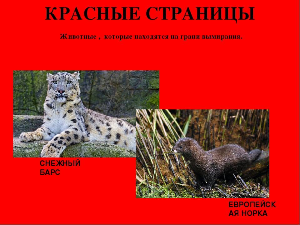 картинки из красной книги животные и растения россии приготовленные томатов черри