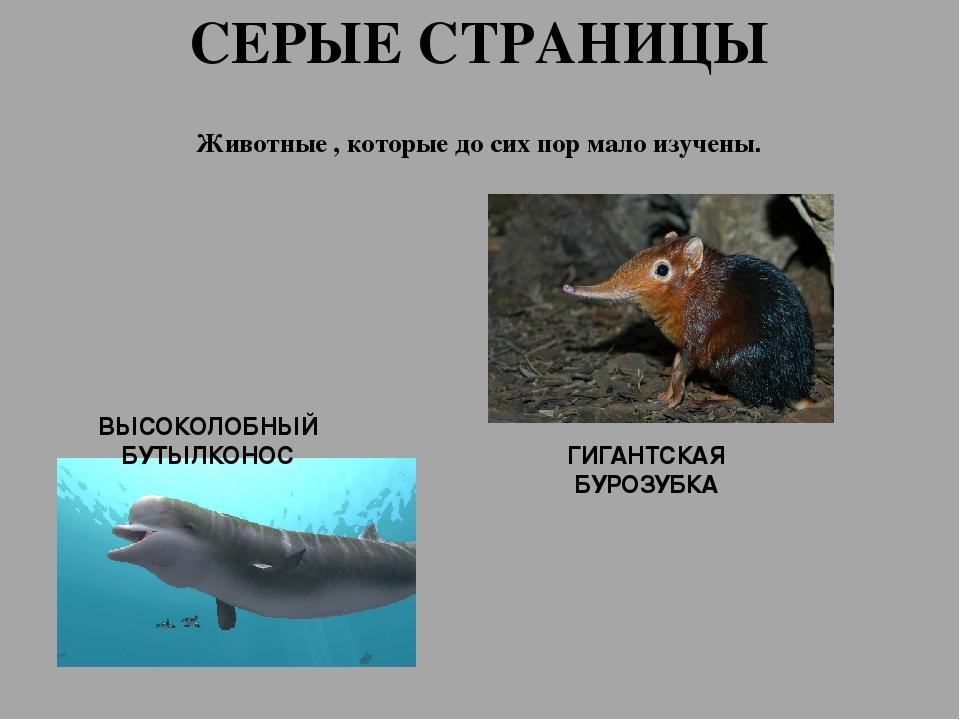 Серые страницы красной книги россии