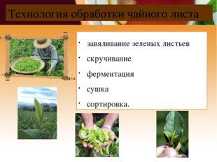 Технология обработки чайного листа завяливание зеленых листьев скручивание фе