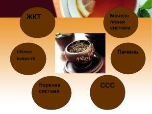 Мочеполовая система Обмен веществ Нервная система ССС Печень ЖКТ