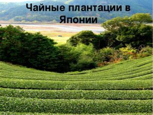 Чайные плантации в Японии