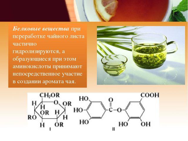 Белковые вещества при переработке чайного листа частично гидролизируются, а о...