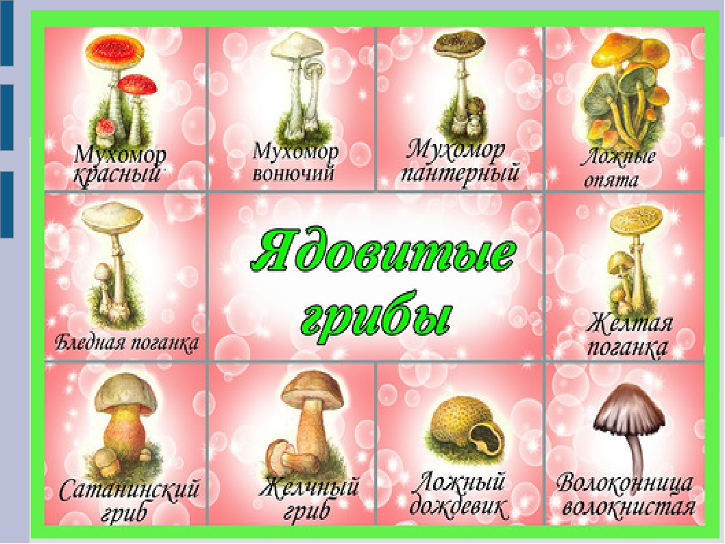 картинки ядовитых грибов и ягод с названиями все это