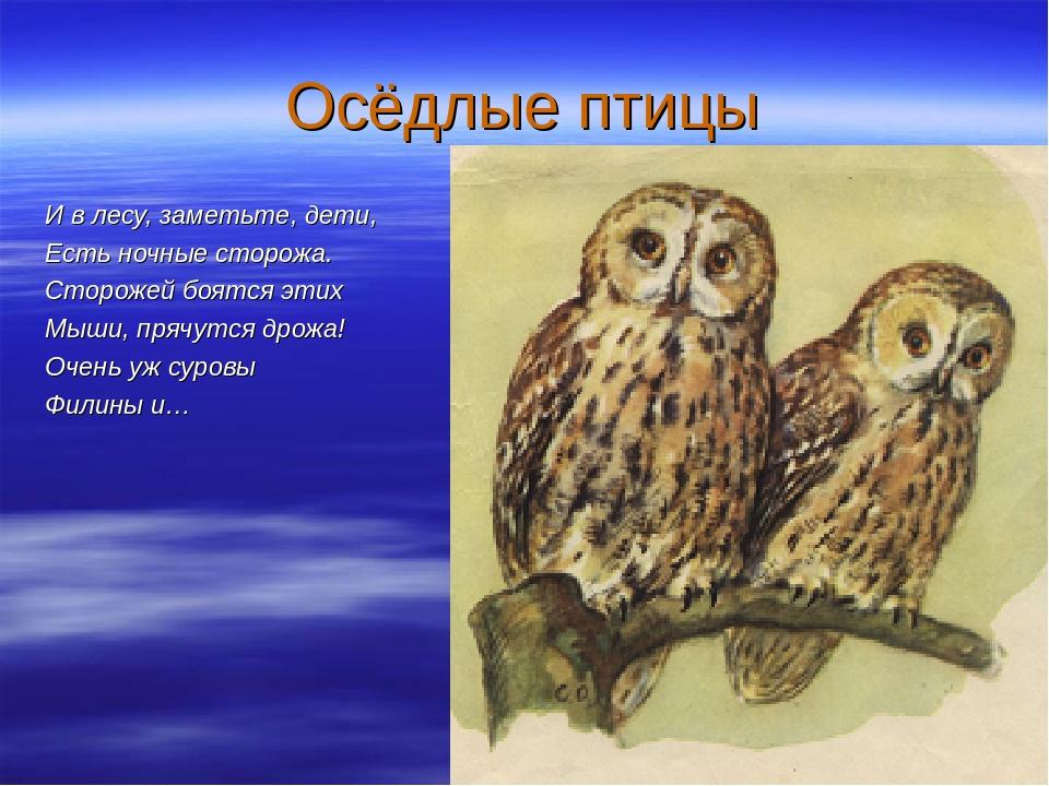 совы перелетные птицы или нет достаточно