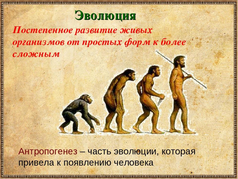 Картинки этапов эволюции человека