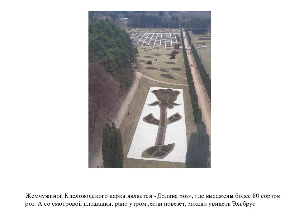 Жемчужиной Кисловодского парка является «Долина роз», где высажены более 80 с...