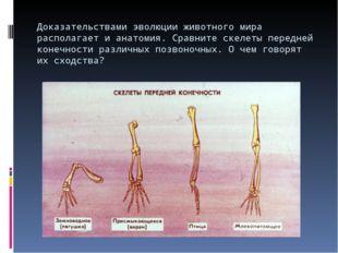 Доказательствами эволюции животного мира располагает и анатомия. Сравните ске