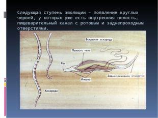 Следующая ступень эволюции – появление круглых червей, у которых уже есть вну