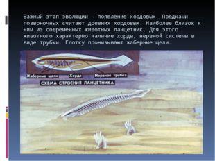 Важный этап эволюции – появление хордовых. Предками позвоночных считают древн