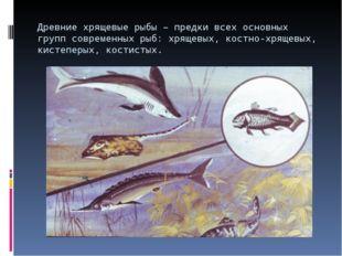 Древние хрящевые рыбы – предки всех основных групп современных рыб: хрящевых,