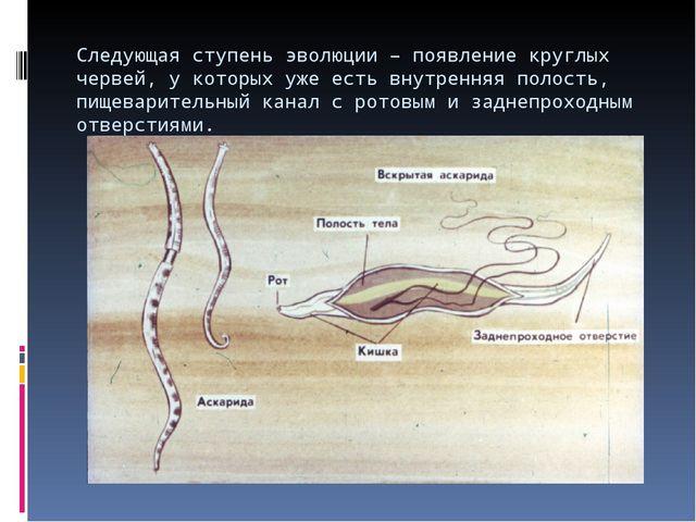 Следующая ступень эволюции – появление круглых червей, у которых уже есть вну...