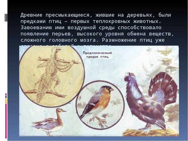 Древние пресмыкающиеся, жившие на деревьях, были предками птиц – первых тепло...