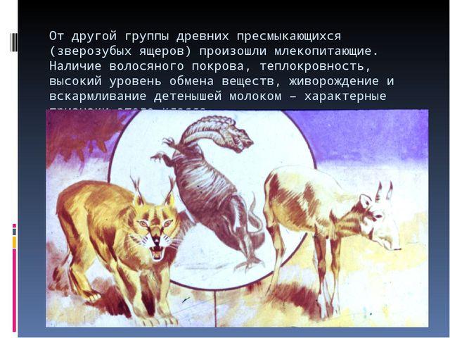 От другой группы древних пресмыкающихся (зверозубых ящеров) произошли млекопи...