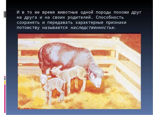 И в то же время животные одной породы похожи друг на друга и на своих родител...
