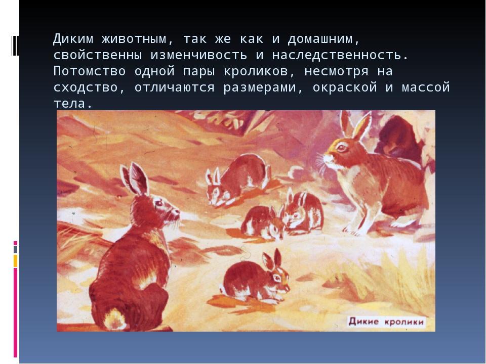 Диким животным, так же как и домашним, свойственны изменчивость и наследствен...