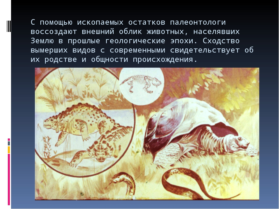 С помощью ископаемых остатков палеонтологи воссоздают внешний облик животных,...