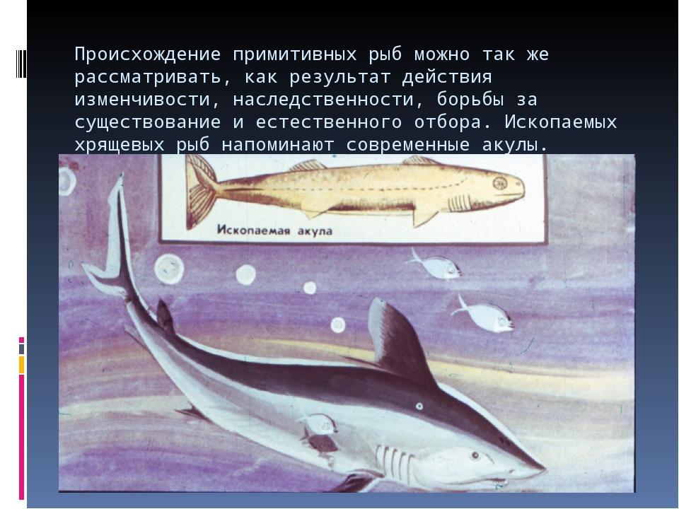 Происхождение примитивных рыб можно так же рассматривать, как результат дейст...