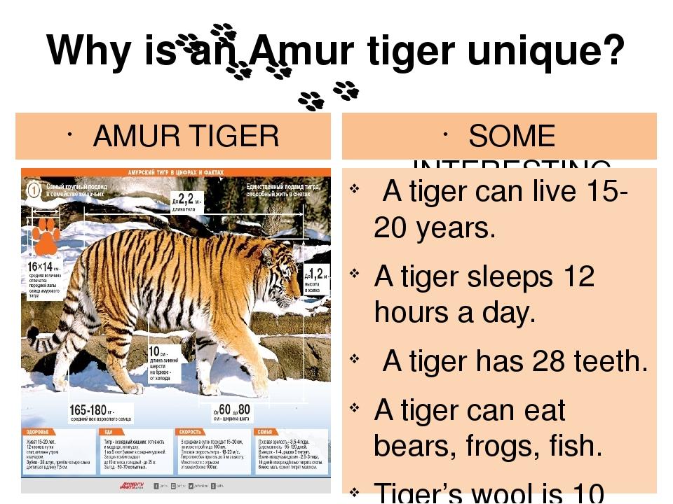 Про тигров реферат на английском языке 1020
