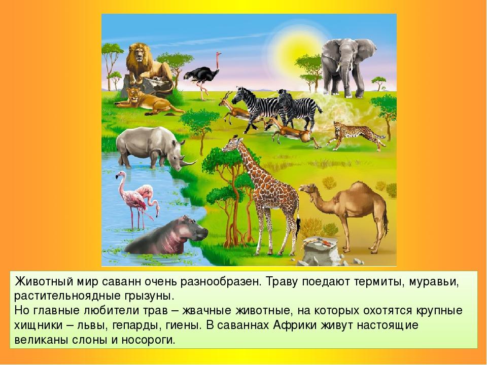 Животный мир саванн очень разнообразен. Траву поедают термиты, муравьи, расти...