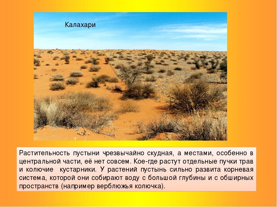 Растительность пустыни чрезвычайно скудная, а местами, особенно в центральной...
