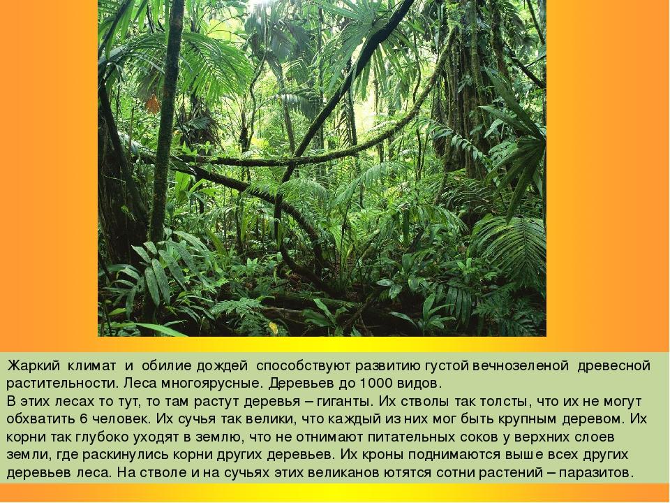Жаркий климат и обилие дождей способствуют развитию густой вечнозеленой древе...