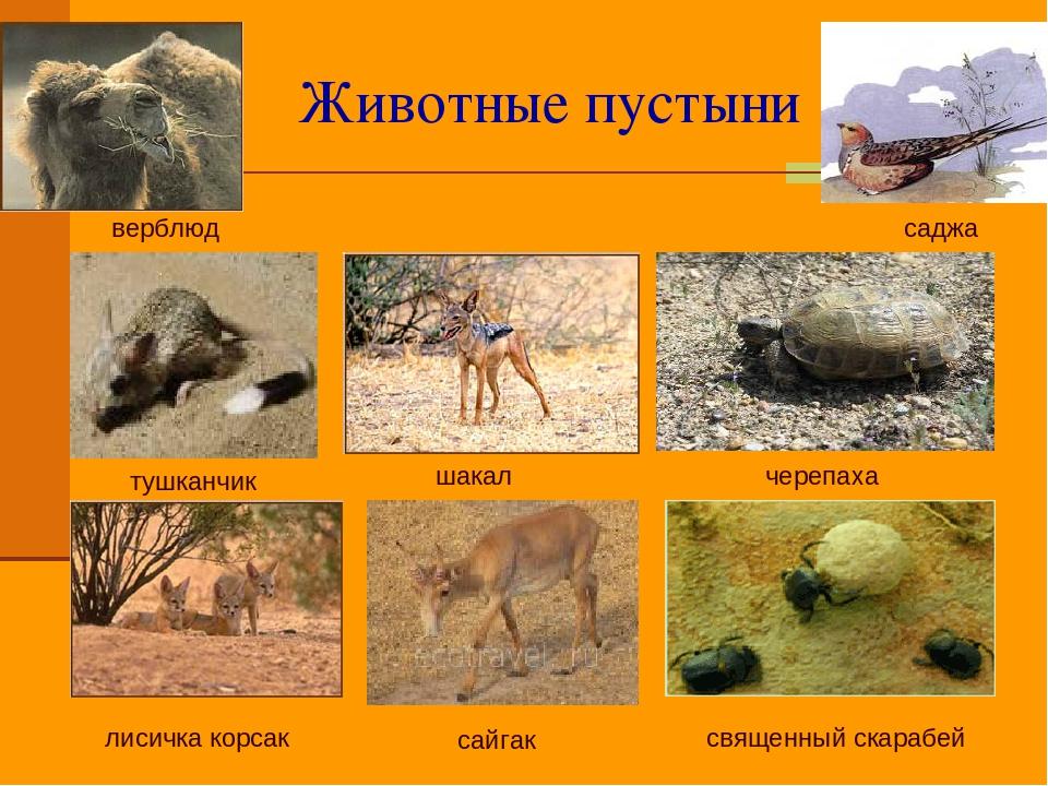 этому какие животные живут в пустыни это лучший вариант
