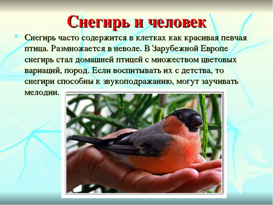 фото и рассказы о птицах избранником