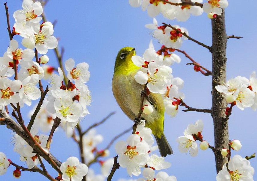 оно картинка красота весны окружающий мир поделиться впечатлениями