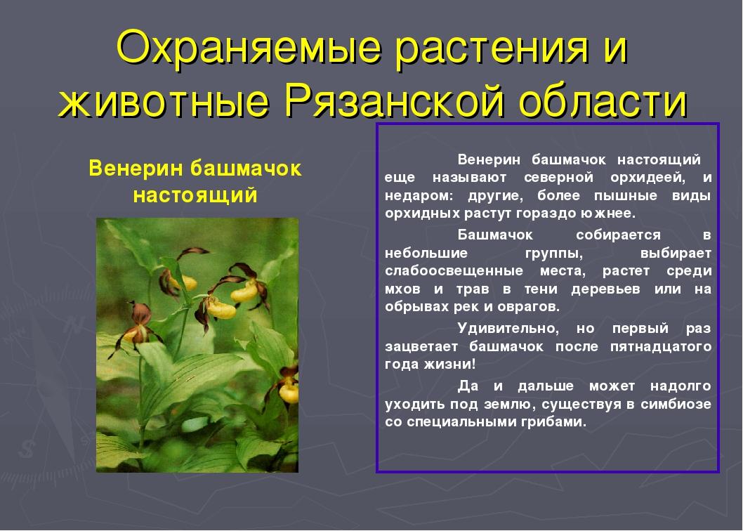 Растения красной книги рязанской области фото и описание