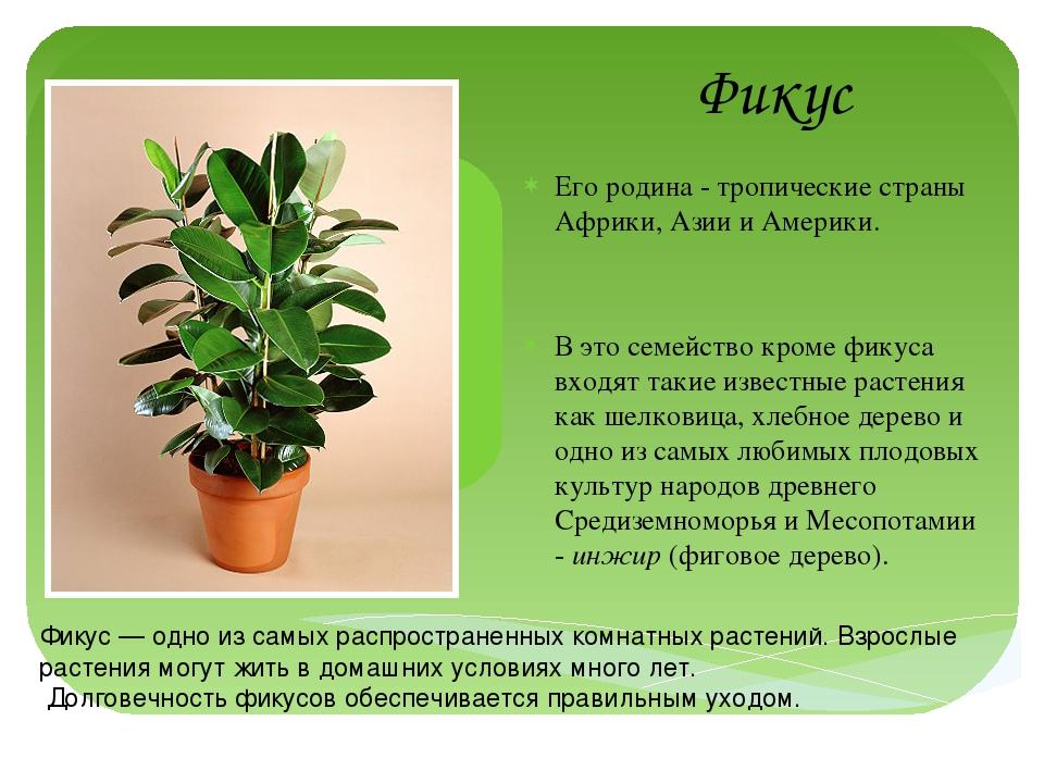 Комнатное растение уход и размножение