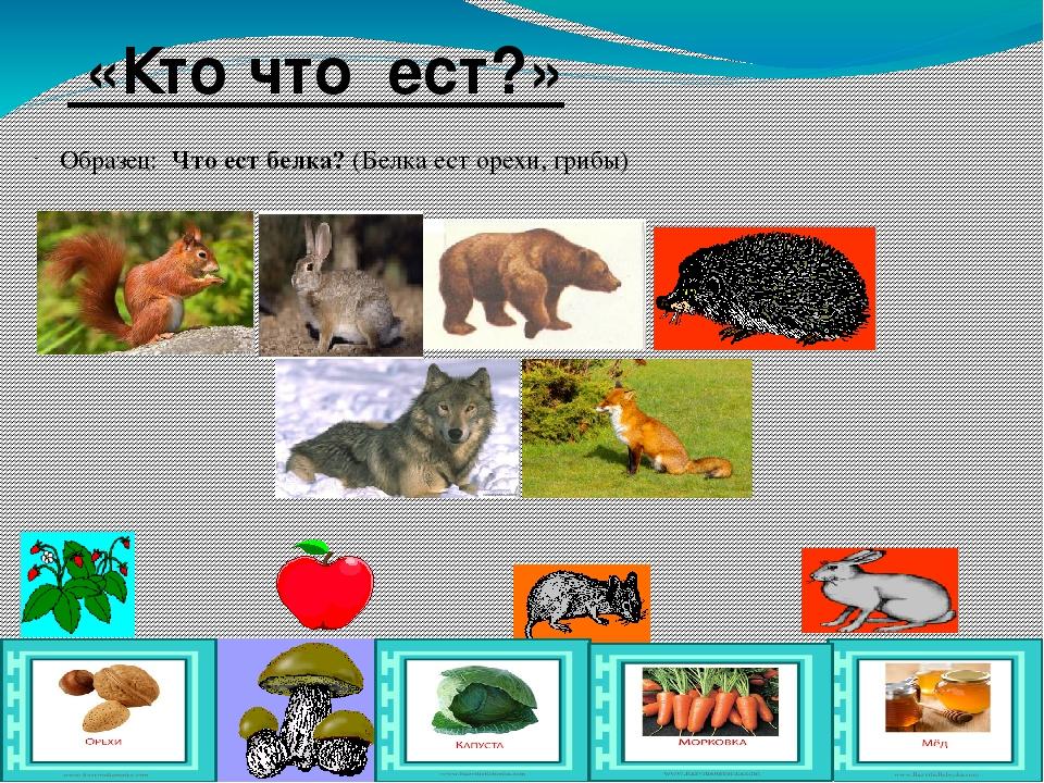 Картинки животные чем питаются